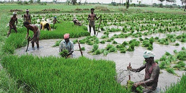 pattukkottaiinfo-Tamil -News