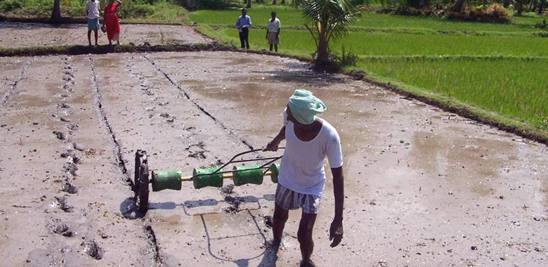 Direct paddy seeding
