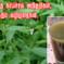 டெங்கு அறிகுறிகள் மற்றும் தடுக்கும் முறைகள் How to prevent and treat Dengue
